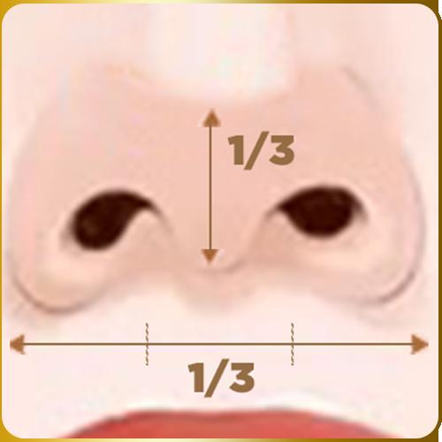 độ cao của trụ mũi